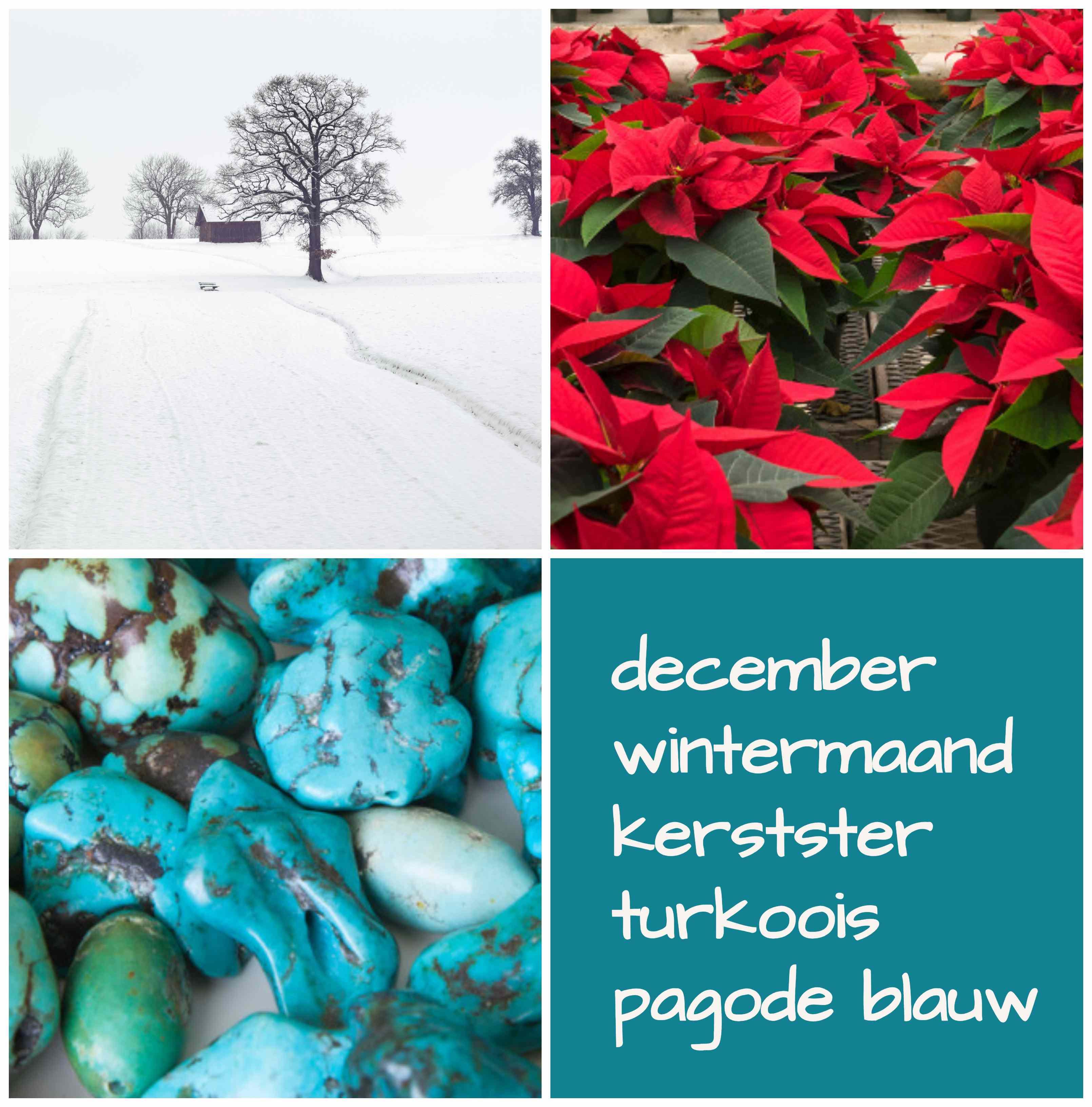 verjaardag december wintermaand geboortebloem geboortesteen geboortekleur